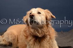 M&N Photography -DSC_4257