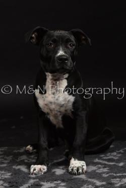 M&N Photography -DSC_2658