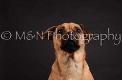 M&N Photography -DSC_5458