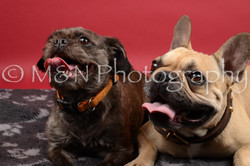 M&N Photography -DSC_8500