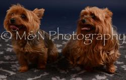 M&N Photography -DSC_0415