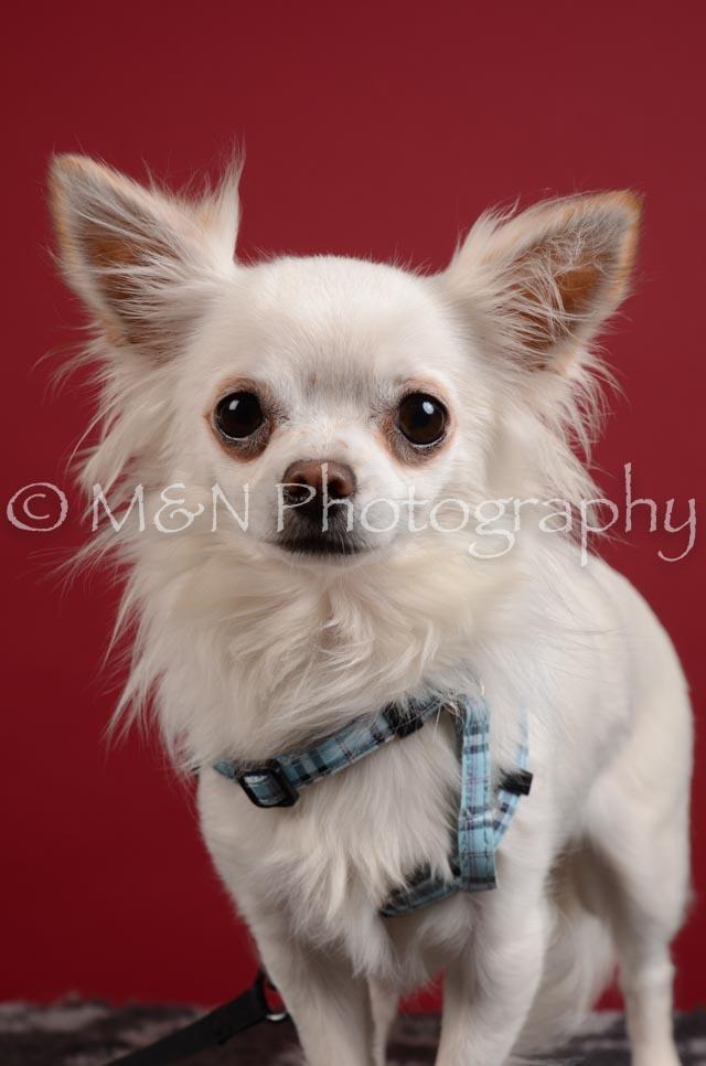 M&N Photography -DSC_3358