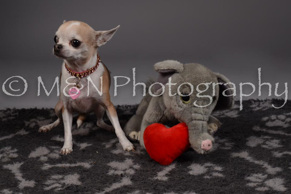M&N Photography -DSC_2192