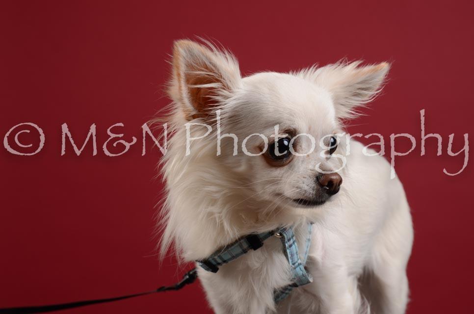 M&N Photography -DSC_3354