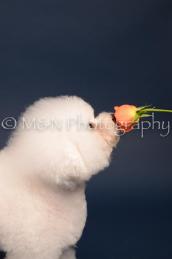 M&N Photography -DSC_3895