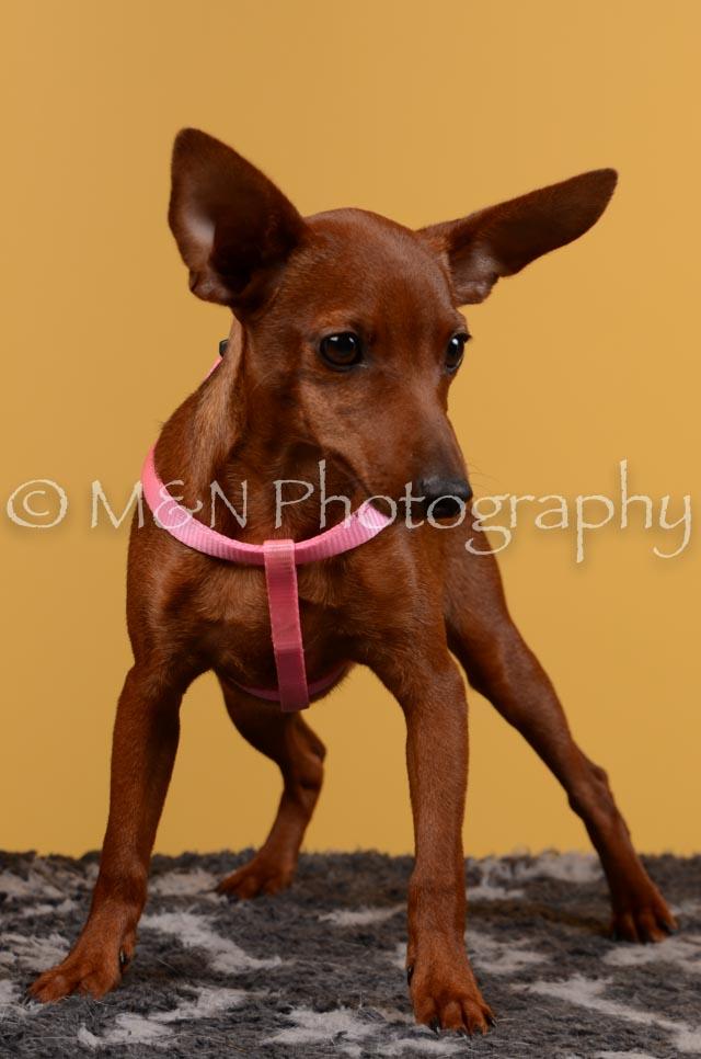 M&N Photography -DSC_4598