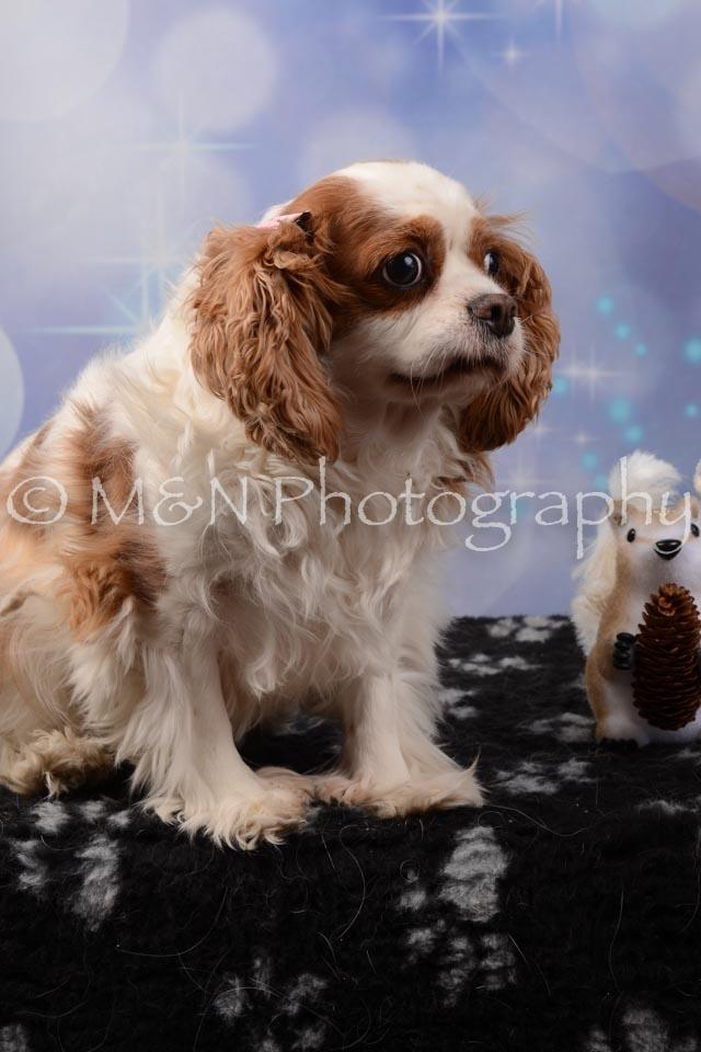 M&N Photography -DSC_6948