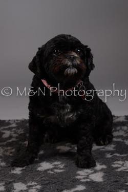M&N Photography -DSC_2330