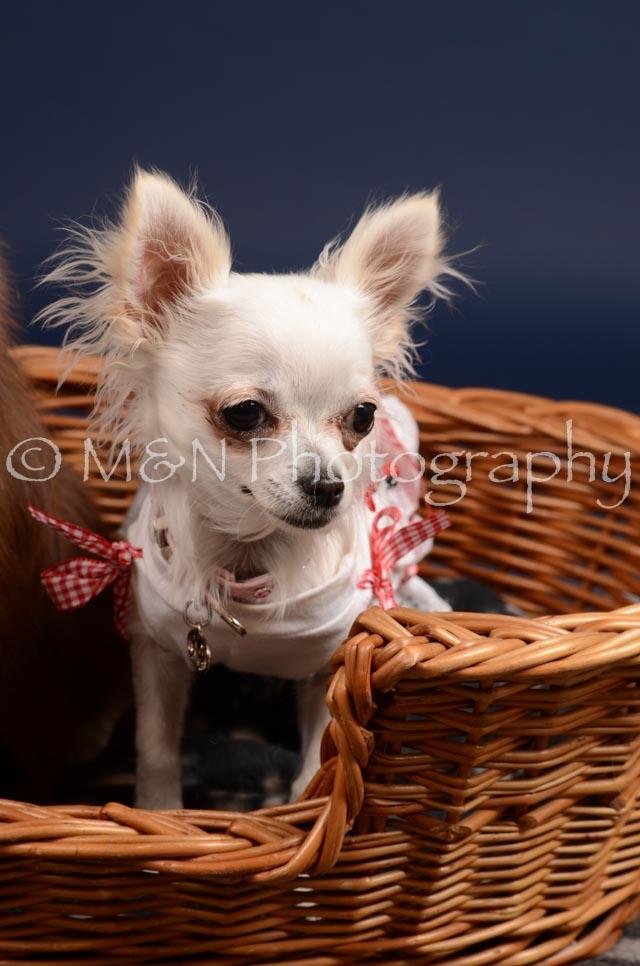 M&N Photography -DSC_0448