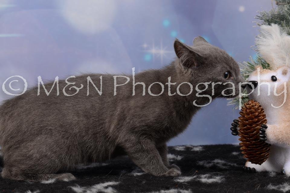 M&N Photography -DSC_6534