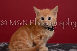 M&N Photography -DSC_3006