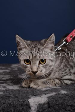 M&N Photography -DSC_4275-2