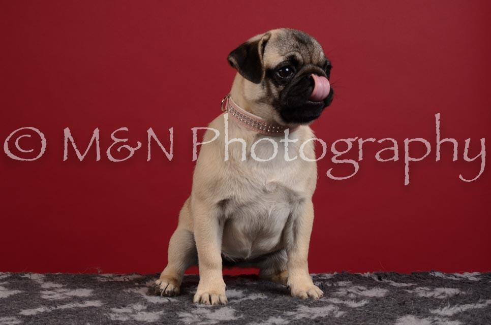 M&N Photography -DSC_3388