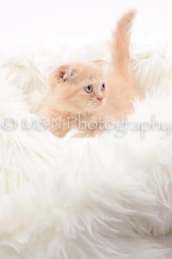 M&N Photography -DSC_8832