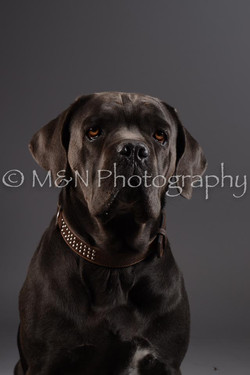 M&N Photography -DSC_2167