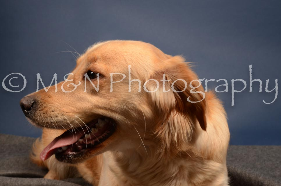 M&N Photography -DSC_4151