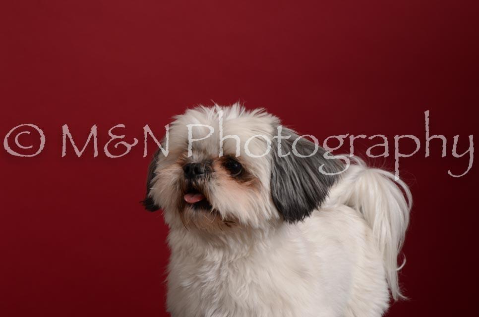 M&N Photography -DSC_3505