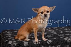 M&N Photography -DSC_5292