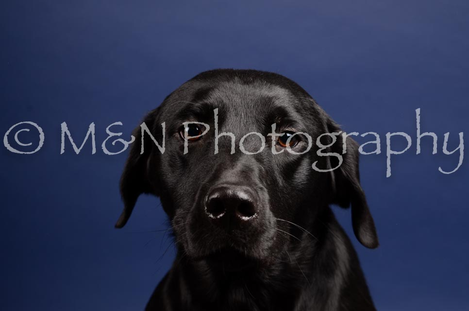 M&N Photography -IMG_4778