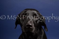 M&N Photography -IMG_4778