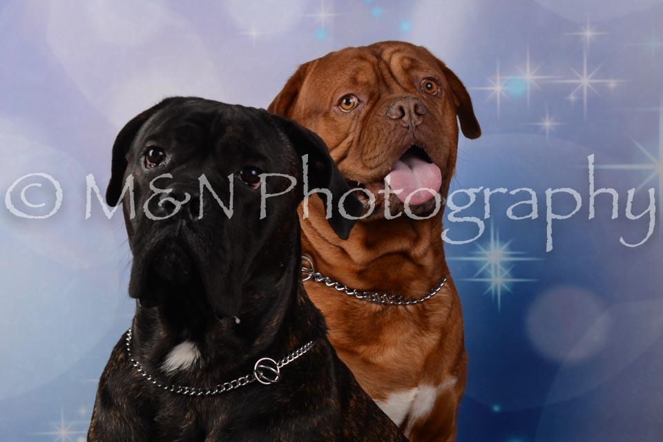 M&N Photography -DSC_6817