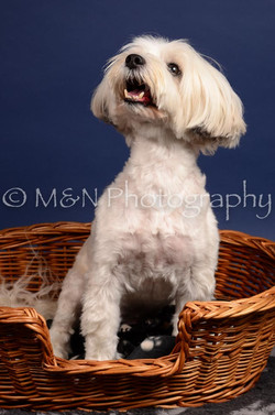 M&N Photography -IMG_4583