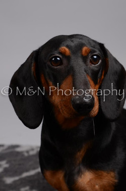 M&N Photography -DSC_2864