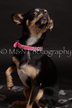 M&N Photography -DSC_0122