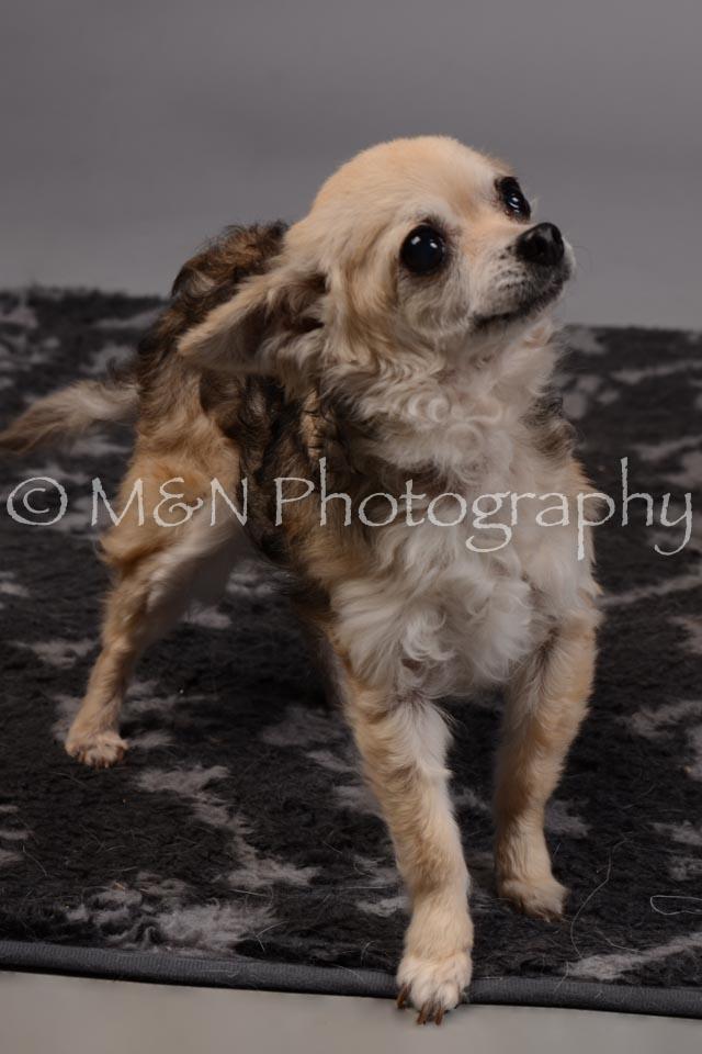 M&N Photography -DSC_2685