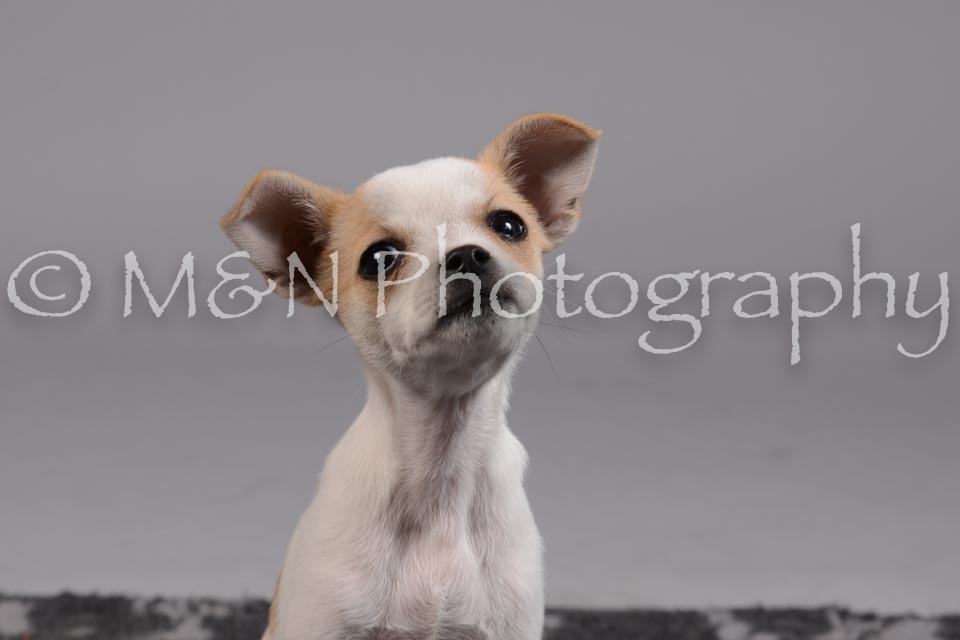 M&N Photography -DSC_2418