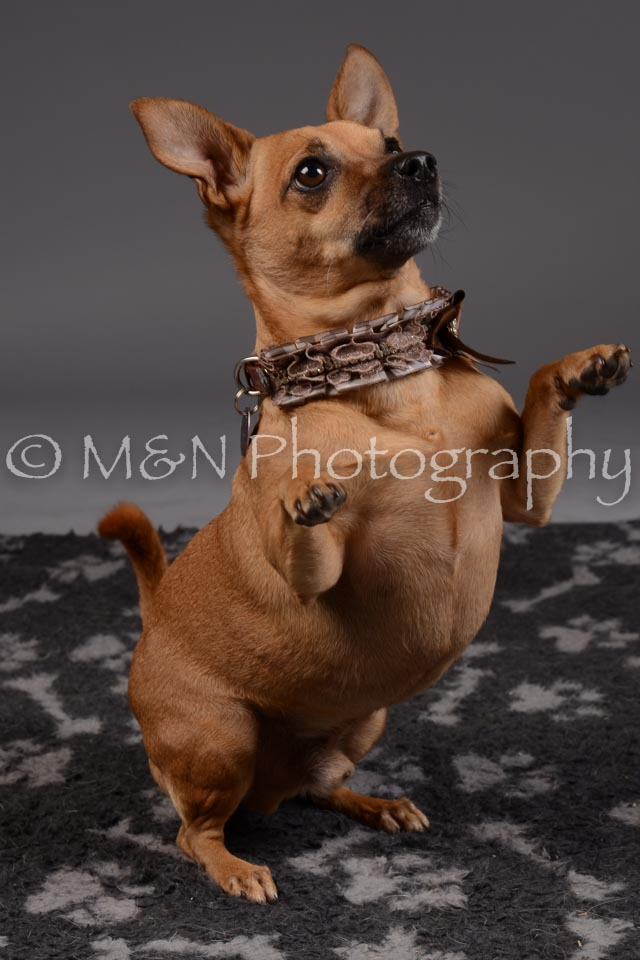 M&N Photography -DSC_2227