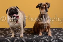 M&N Photography -DSC_4674