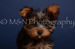 M&N Photography -DSC_4344