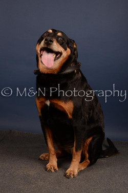 M&N Photography -DSC_4668