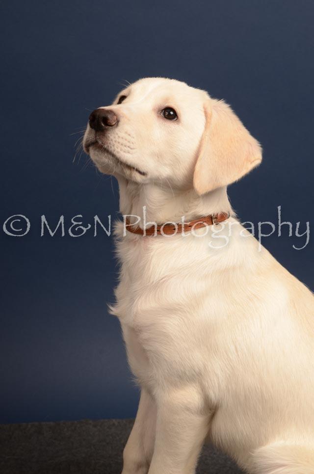 M&N Photography -DSC_4388