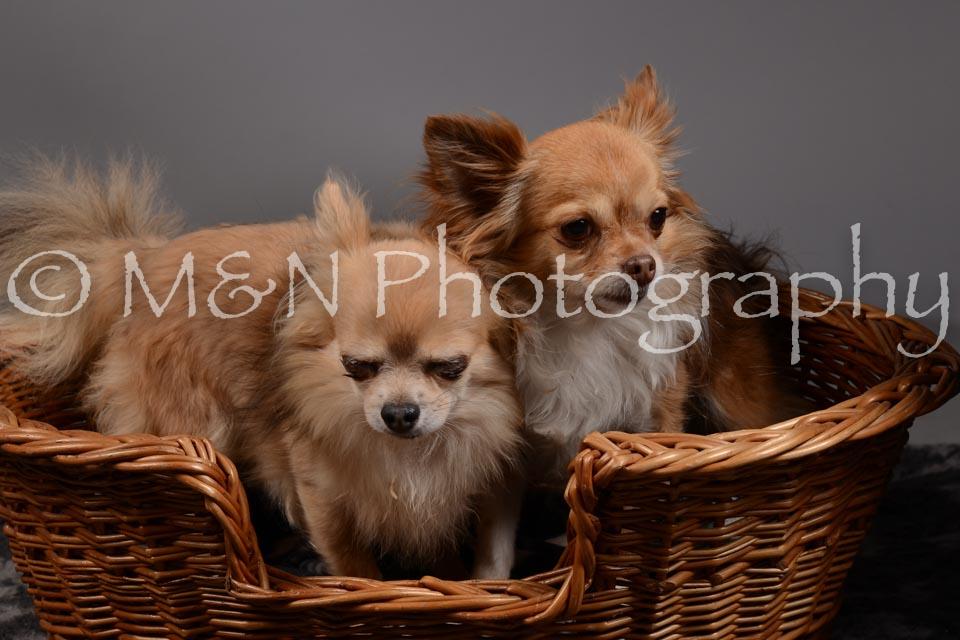 M&N Photography -DSC_1816