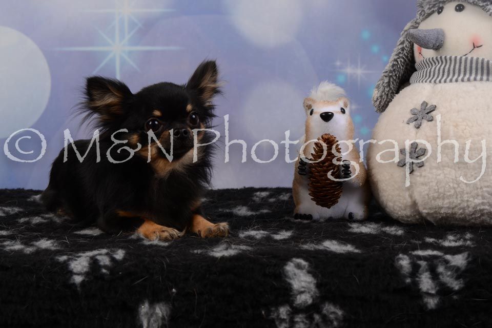 M&N Photography -DSC_6788