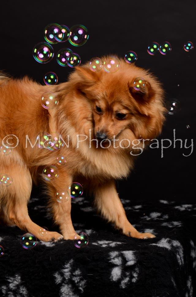 M&N Photography -DSC_5936