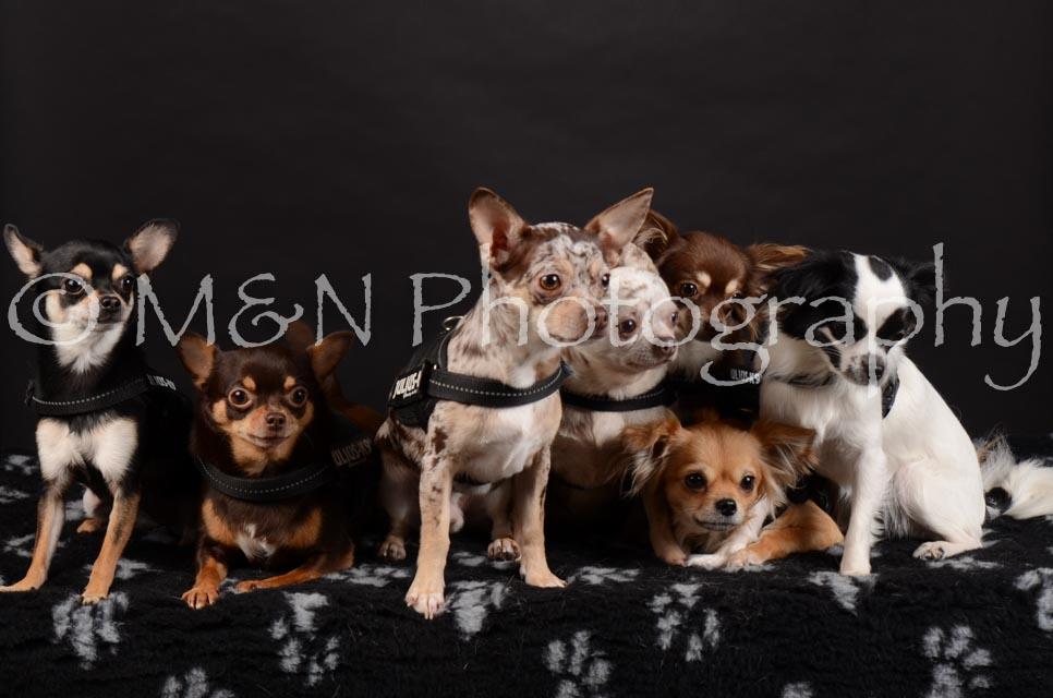 M&N Photography -DSC_5554