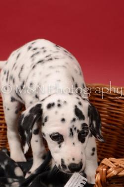 M&N Photography -DSC_6792