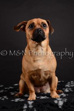M&N Photography -DSC_5457