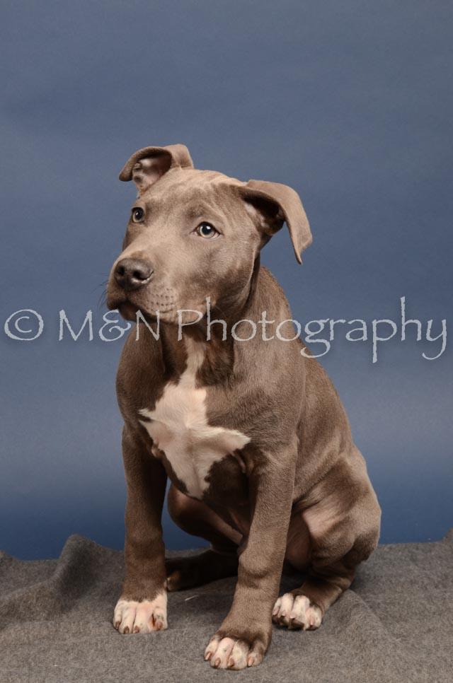 M&N Photography -DSC_4314