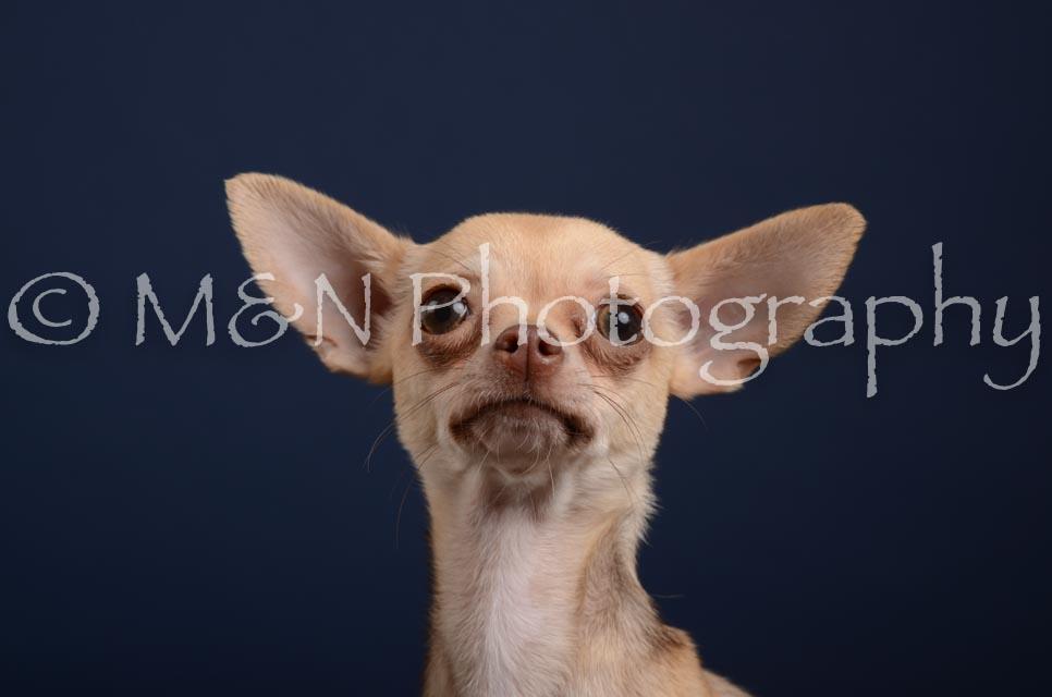 M&N Photography -DSC_4203