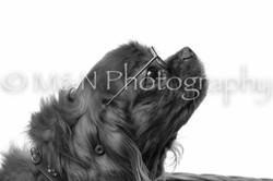 M&N Photography -DSC_8715-2