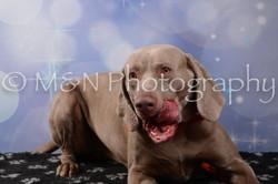M&N Photography -DSC_7052