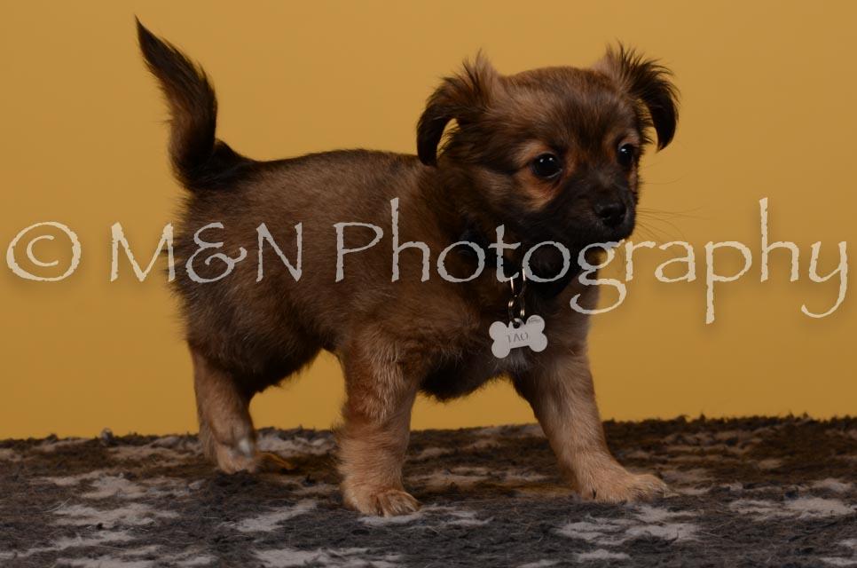 M&N Photography -DSC_4731