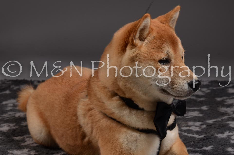 M&N Photography -DSC_2149