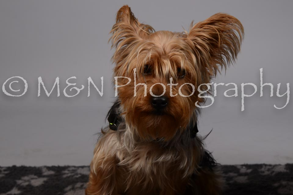 M&N Photography -DSC_2633