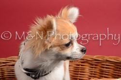 M&N Photography -DSC_8599