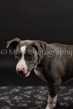 M&N Photography -DSC_2586